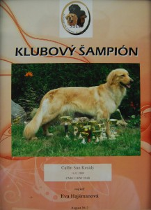 klubovy-sampion.jpg